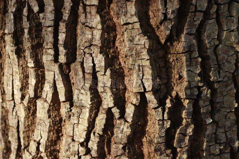 De houten Boom van de Textuur Dichte Aard stock foto