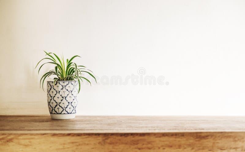 De houten bovenkant van de bureaulijst met boompot op witte muur, met exemplaarruimte stock fotografie