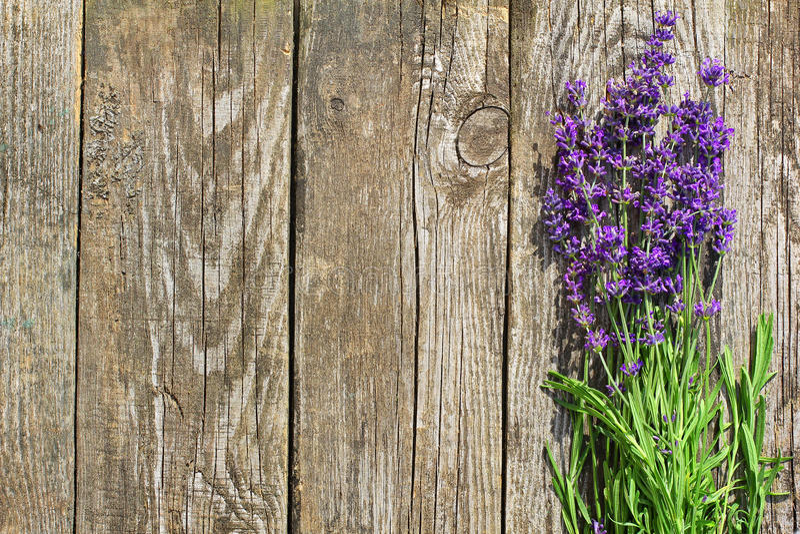 De houten Lavendel bloeit Achtergrond