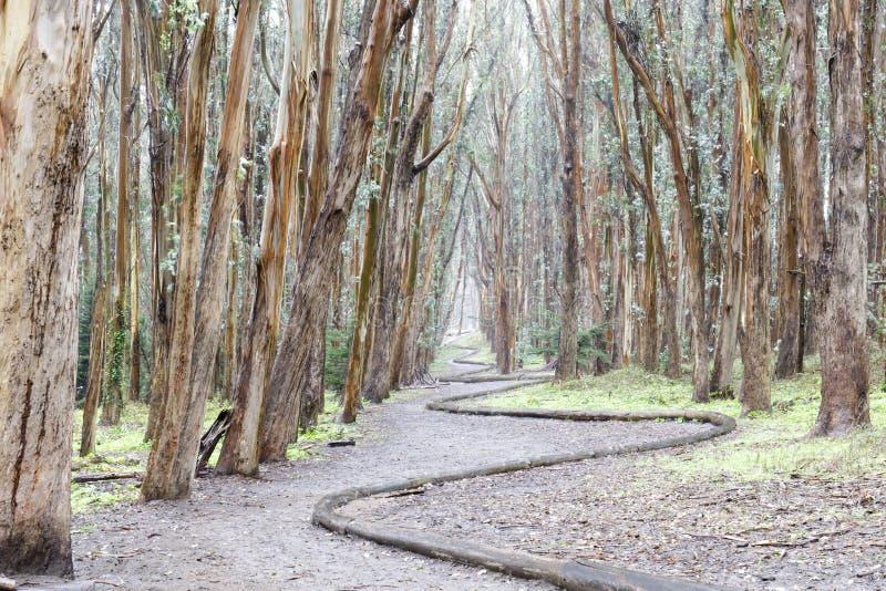 De Houten Lijn van het eucalyptusbosje op een regenachtige dag royalty-vrije stock foto's