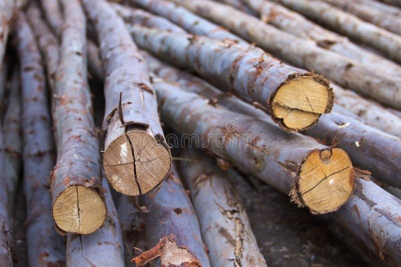 De houten stapel van de eucalyptus royalty-vrije stock foto's
