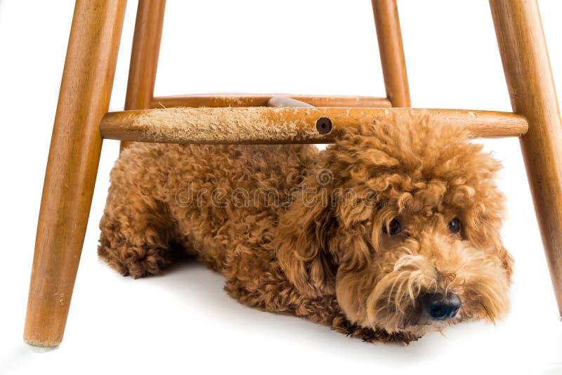 De houten stoel zwaar beschadigd door ongehoorzame hond kauwt en beten stock fotografie