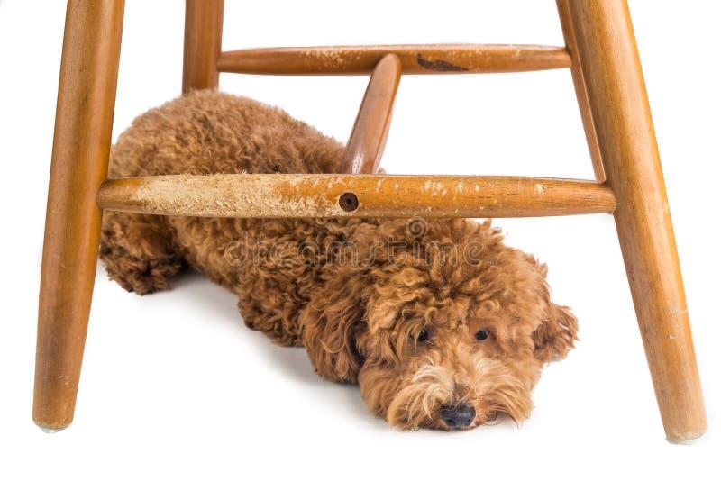De houten stoel zwaar beschadigd door ongehoorzame hond kauwt en beten royalty-vrije stock afbeelding