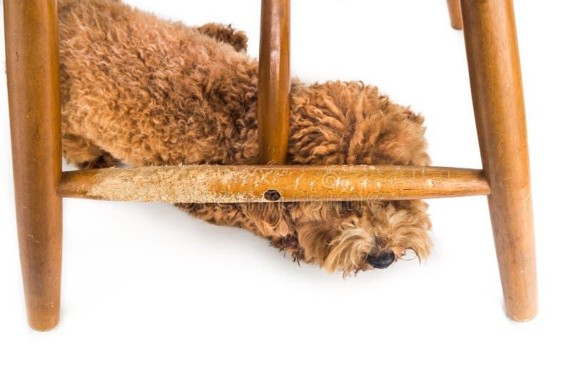 De houten stoel zwaar beschadigd door ongehoorzame hond kauwt en beten stock foto's