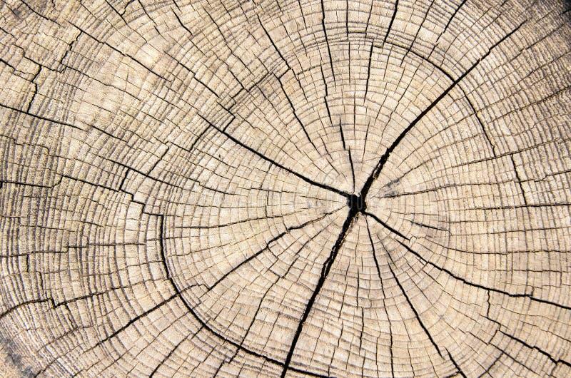 De houten textuur sneed boomboomstam stock afbeeldingen