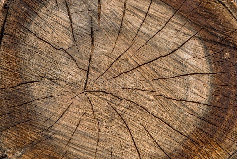 De houten textuur sneed boomboomstam royalty-vrije stock afbeelding