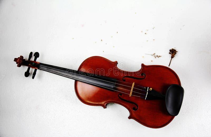 De houten viool met bloemblaadje van kleine droge bloem zette op wit achtergrond, wijnoogst en kunstontwerp royalty-vrije stock afbeeldingen