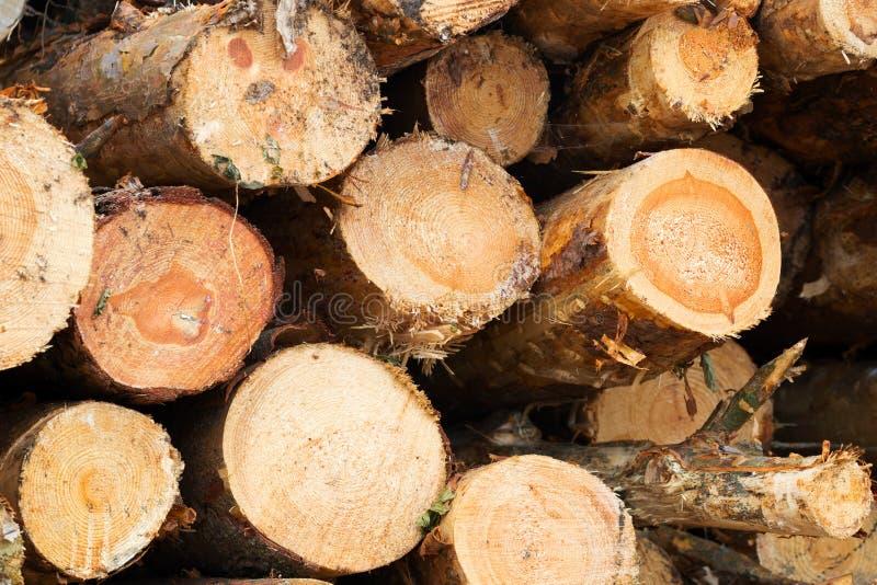 De houten zaagbesnoeiingen openden het bos het programma stock afbeeldingen