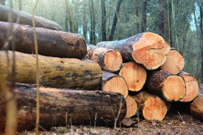 De houtsnede opent een rij het programma Forest Clearance royalty-vrije stock afbeeldingen