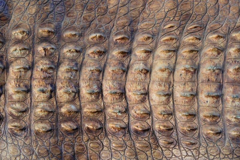 De huid van de grote krokodil royalty-vrije stock afbeeldingen