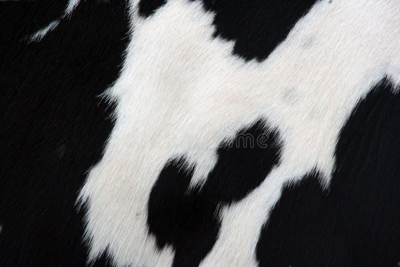 De huid van de koe stock afbeelding