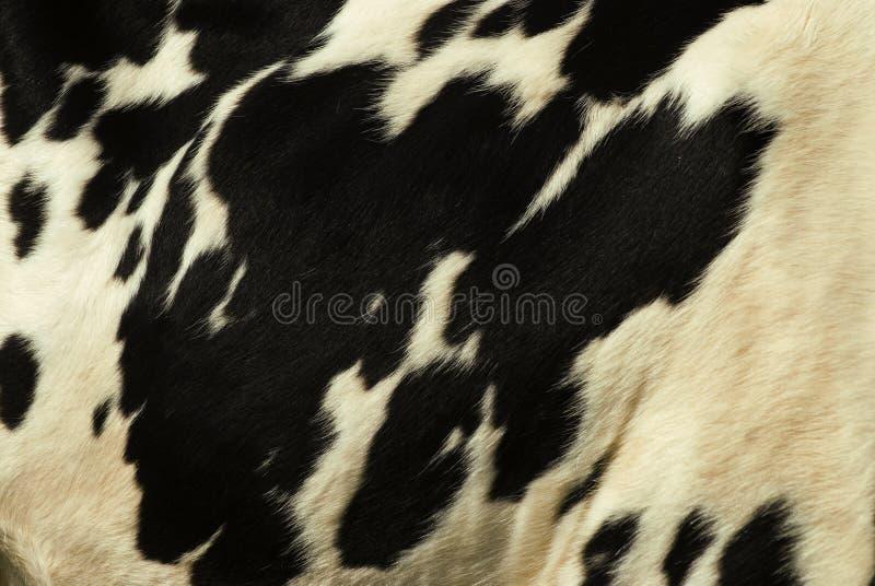 De huid van de koe stock fotografie