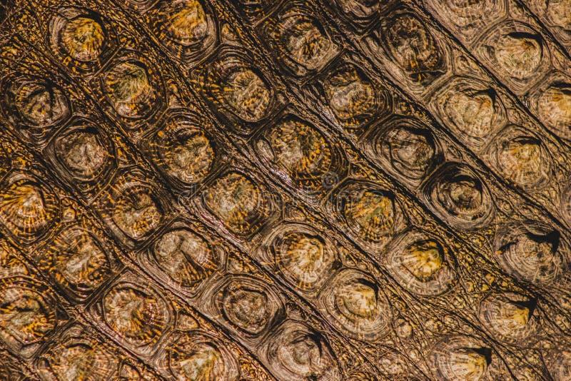 De huid van de krokodil royalty-vrije stock fotografie