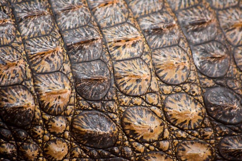 De huid van de krokodil stock afbeeldingen