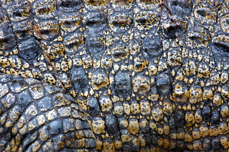 De Huid van de Krokodil van het zoutwater stock foto's