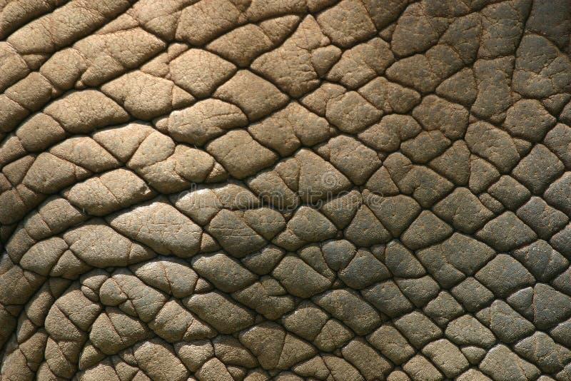 De Huid van de olifant stock fotografie