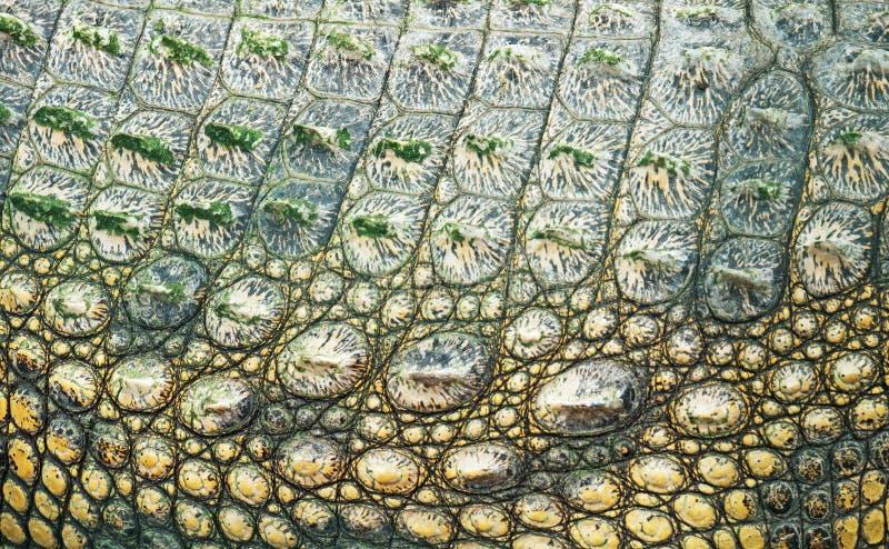 De huid van de krokodil stock fotografie