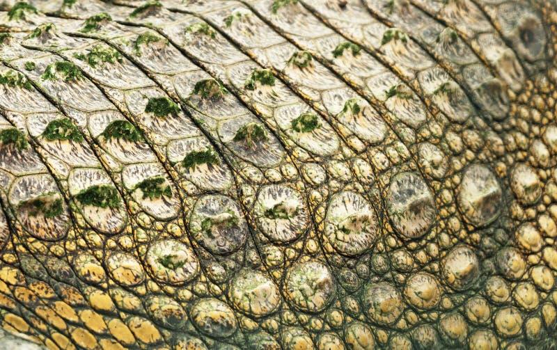 De huid van de krokodil stock afbeelding