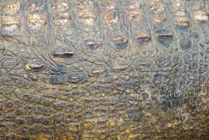 De huid van Krokodil is sterk, stock afbeeldingen