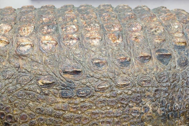 De huid van Krokodil is sterk, royalty-vrije stock foto
