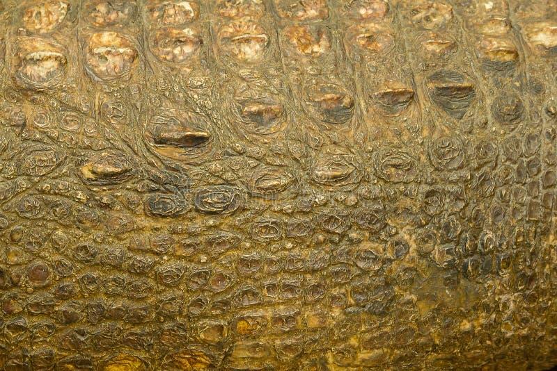 De huid van Krokodil is sterk, stock fotografie