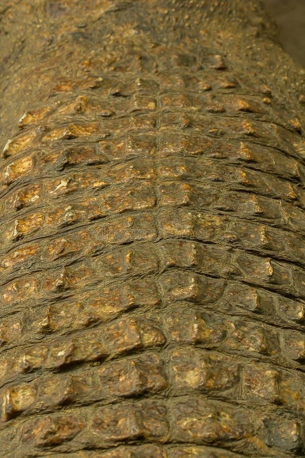 De huid van Krokodil is sterk, stock foto's