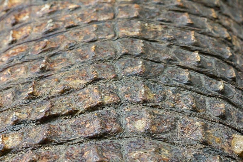 De huid van Krokodil is sterk, royalty-vrije stock afbeelding