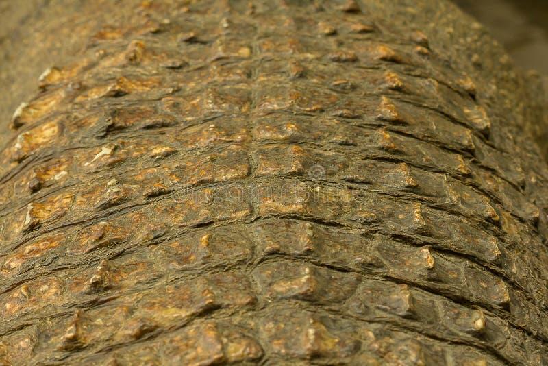 De huid van Krokodil is sterk, royalty-vrije stock fotografie