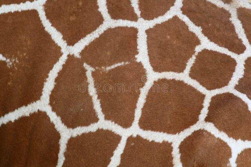 De huidtextuur van de giraf royalty-vrije stock afbeelding