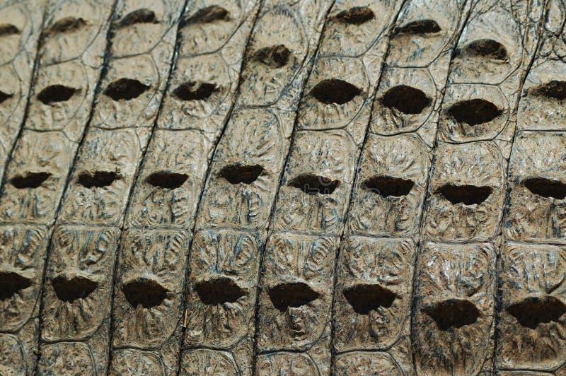 De huidtextuur van de krokodil stock afbeeldingen