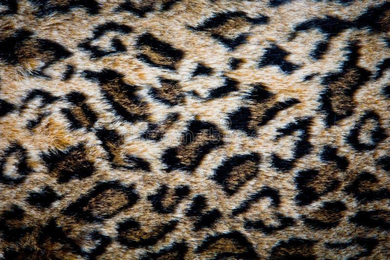 Download De Huidtextuur Van De Luipaard Stock Foto - Afbeelding bestaande uit exotisch, camouflage: 29500856