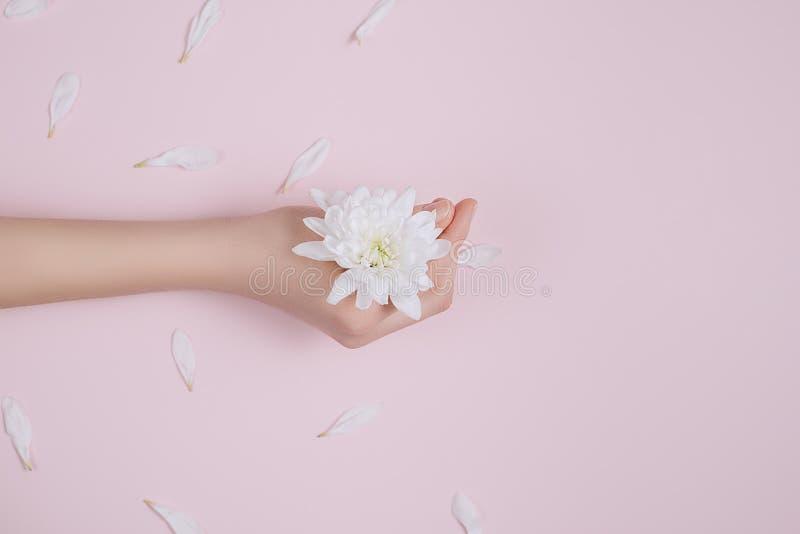 De huidzorg van de creatieve en manierkunst van handen en witte bloemen ter beschikking van vrouwen Vrouwelijke hand met witte bl stock afbeelding