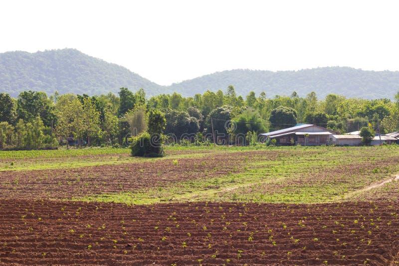 De huisvesting van de maniokaanplanting stock foto's