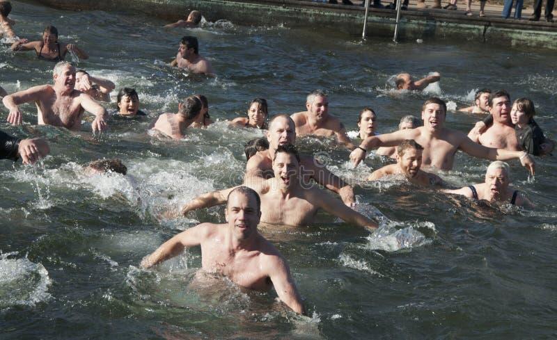 De Ijsbeer Zwemt Redactionele Foto