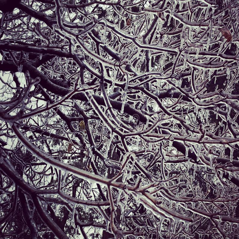 De ijzige boom vertakt zich ijsonweer stock afbeeldingen