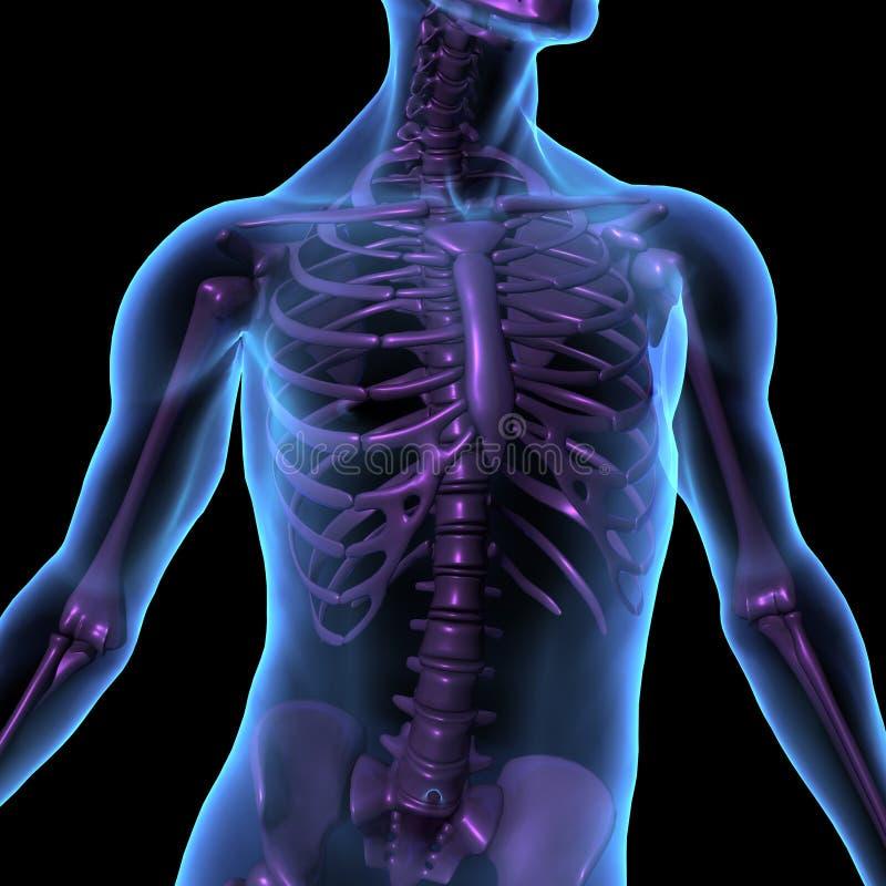 De illustratie mannelijk menselijk lichaam en skelet van de röntgenstraal stock illustratie