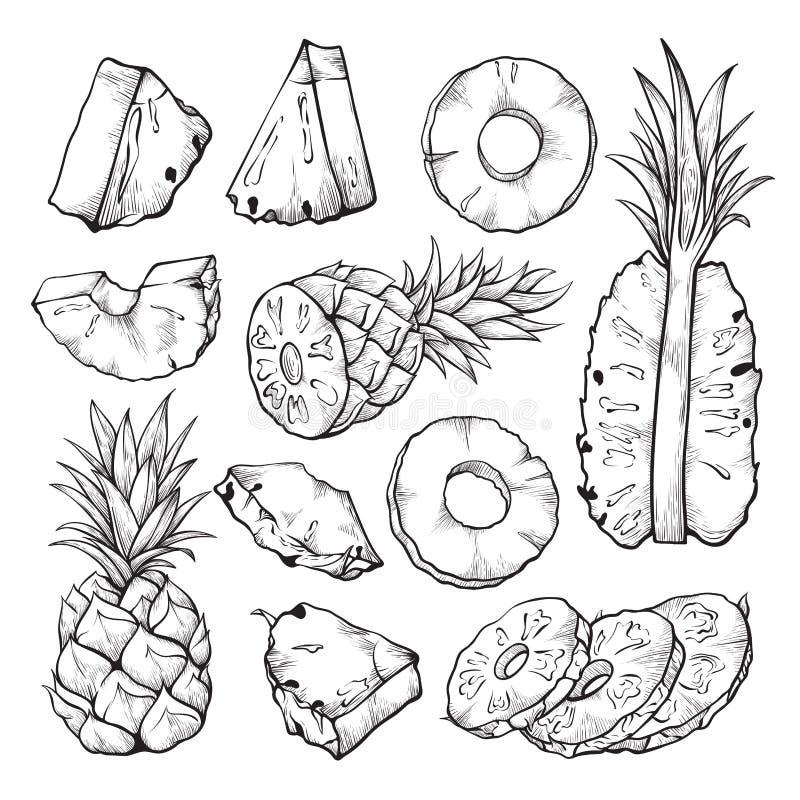 De illustratie van de ananasschets, vers gesneden tropisch fruit vector illustratie