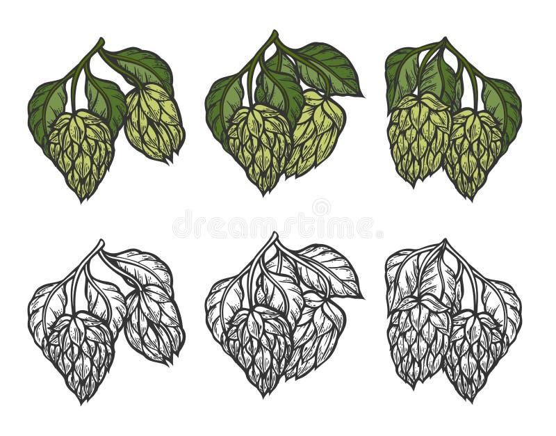 De illustratie van de bierhop stock illustratie