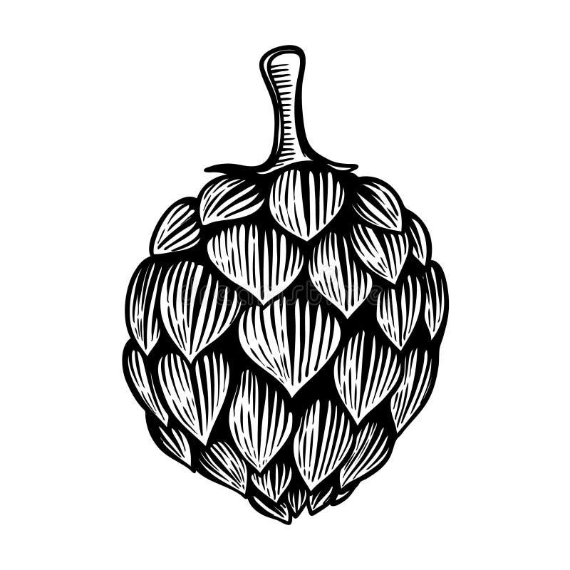 De illustratie van de bierhop in gravurestijl op witte achtergrond wordt geïsoleerd die Ontwerpelement voor embleem, etiket, embl vector illustratie