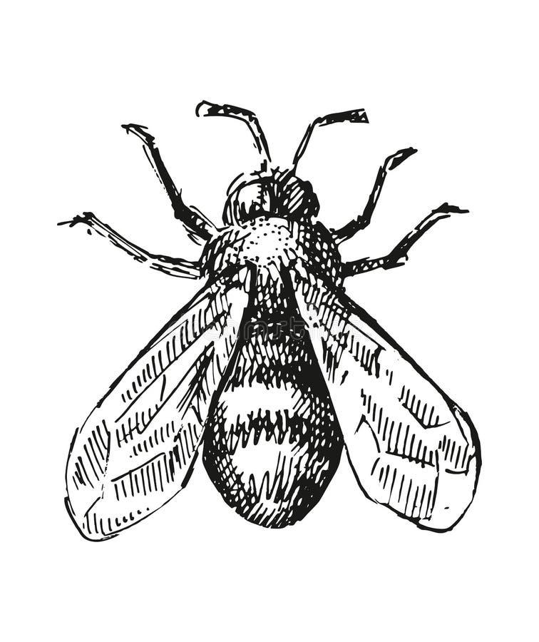 De illustratie van de bijenschets stock illustratie