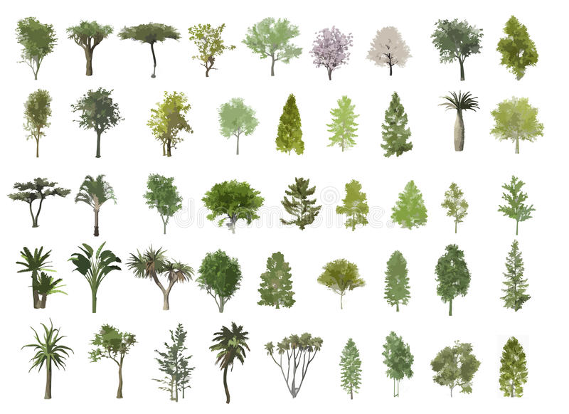 De illustratie van bomen