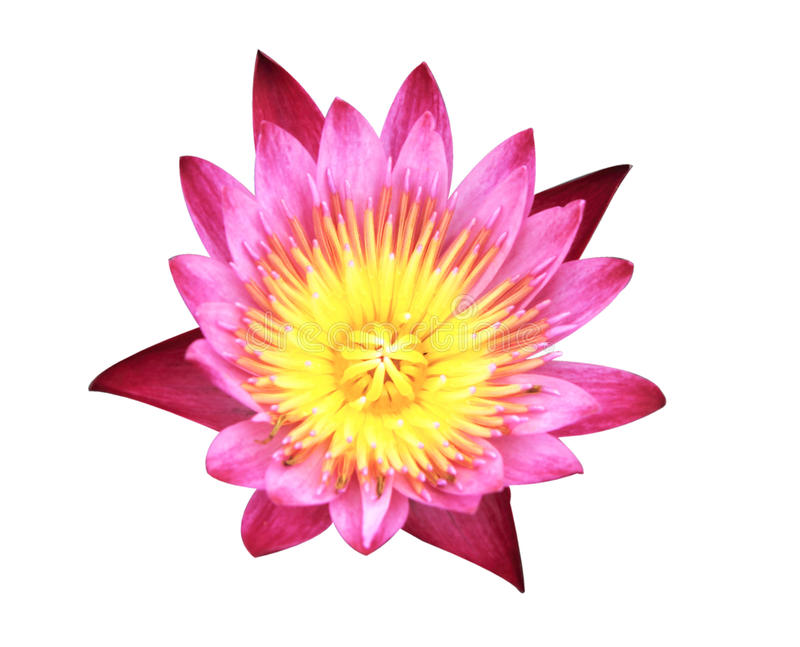 De illustratie van de bloemZen van Lotus royalty-vrije stock fotografie