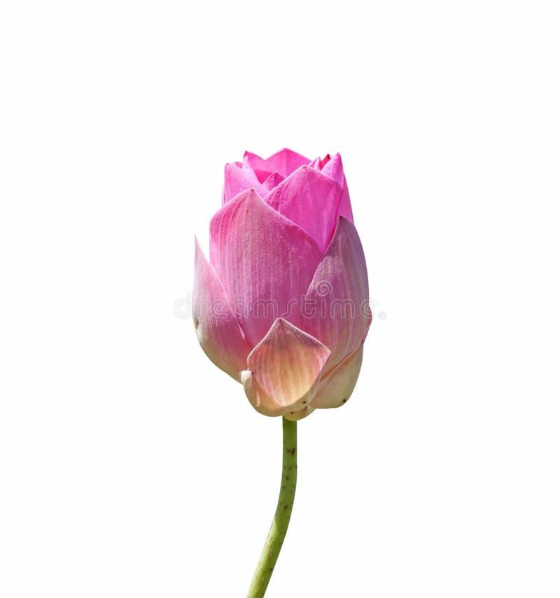 De illustratie van de bloemZen van Lotus royalty-vrije stock afbeeldingen