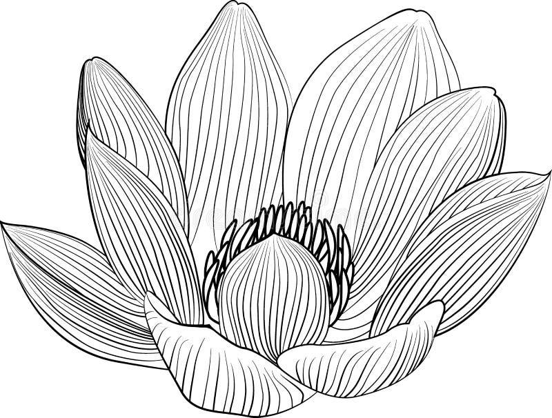 De illustratie van de de bloemlijn van de Lineartlotusbloem Vector abstracte zwart-witte bloemenachtergrond stock illustratie