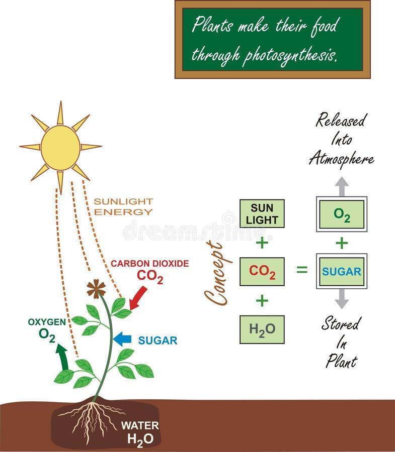 De Illustratie van de fotosynthese stock afbeelding