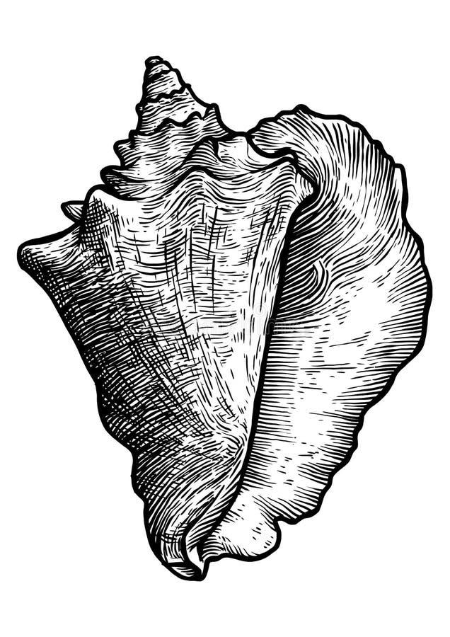 De illustratie van de koninginkroonslak, tekening, gravure, realistische inkt, vector illustratie