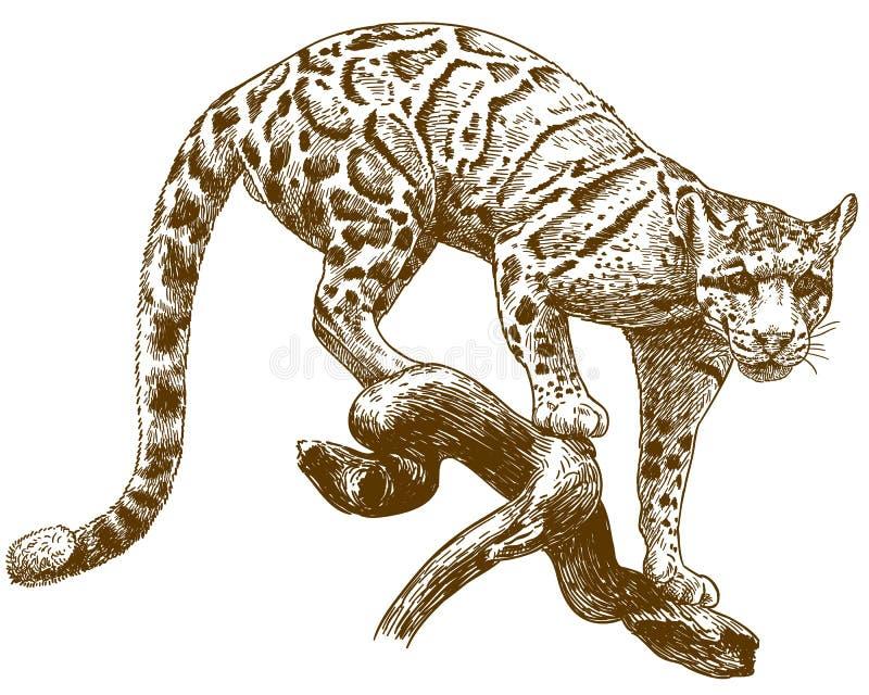 De illustratie van de gravuretekening van betrokken luipaard royalty-vrije illustratie
