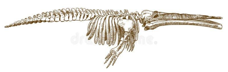 De illustratie van de gravuretekening van cetotheriumwalvis stock illustratie