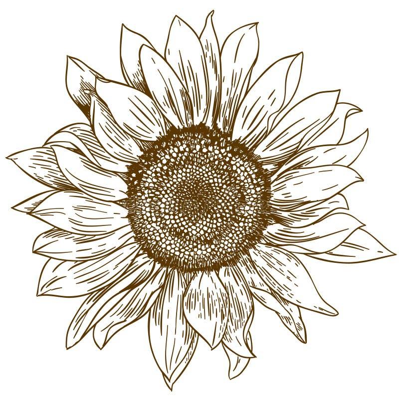 De illustratie van de gravuretekening van grote zonnebloem stock illustratie