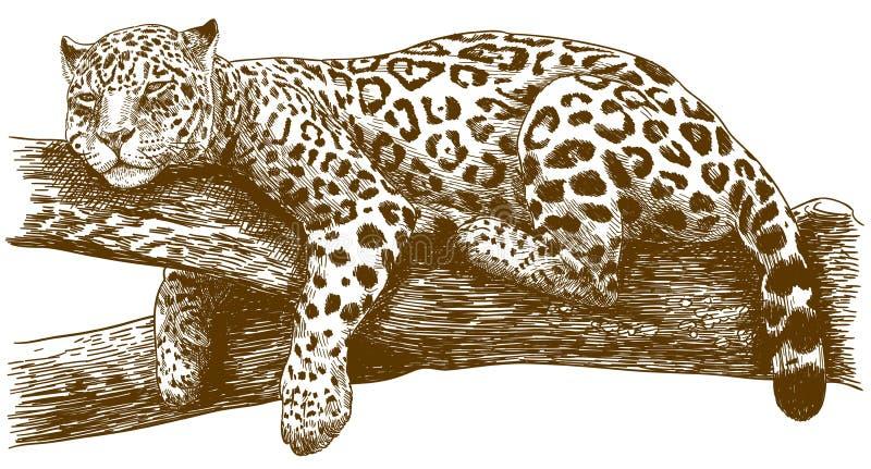 De illustratie van de gravuretekening van luipaard op tak vector illustratie